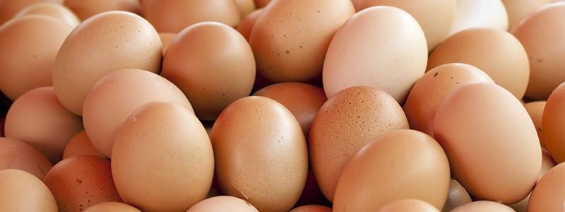 egg-as-a-cocktail-header